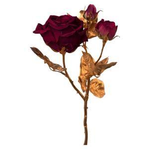 Ruža Rose I
